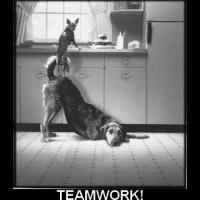 teamwork - working together